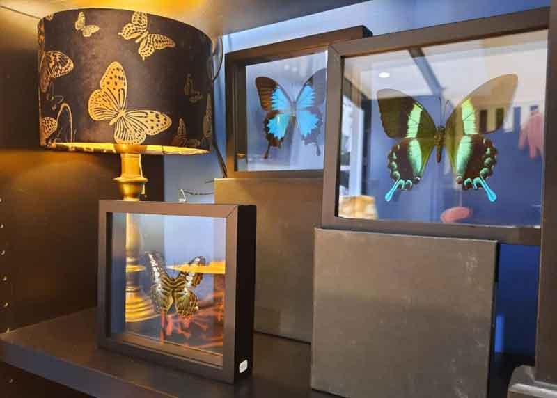 papillons sous verre